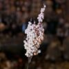 Χιονισμένο κλαρί γκι σομόν, ύψους 27cm